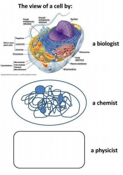 How looks cell interior