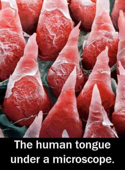 tongue