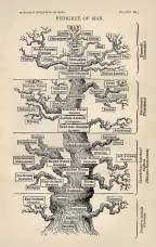 man tree