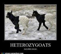 heterozygotes