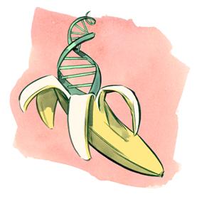 bananadna