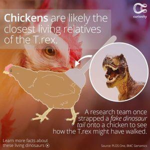 chickenrex
