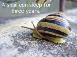 snail sleep