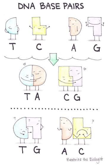 A+T, G+C LFE