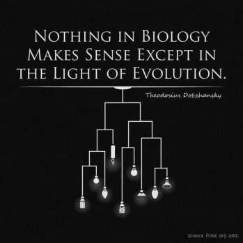 light of evolution
