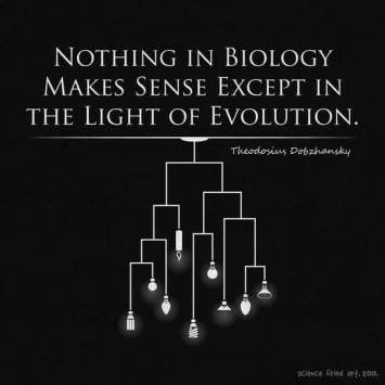 light of evolution