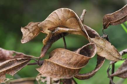 leaf?