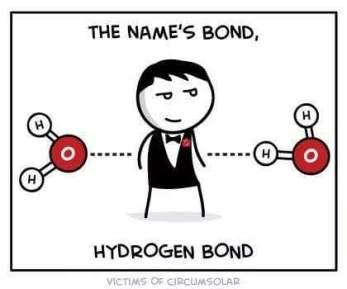 hydrogen bond