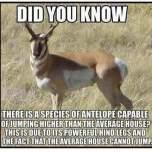 antil