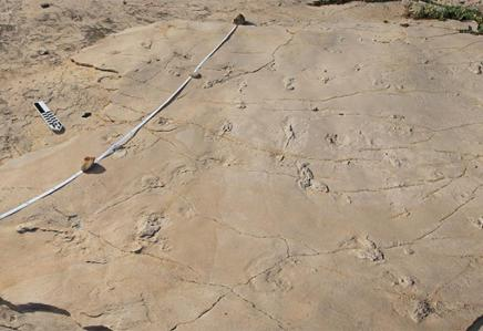 humanoid_trackway-panorama-crete-2010-11-28_007-canon_l-panorama-croped_small